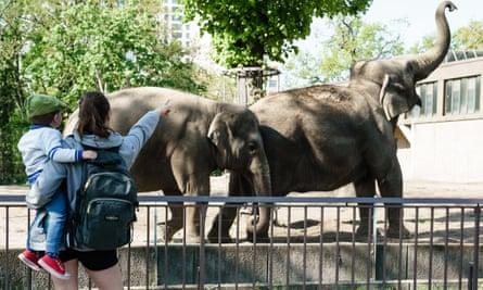 Visitantes al zoológico de Berlín, que volvió a abrir el martes.