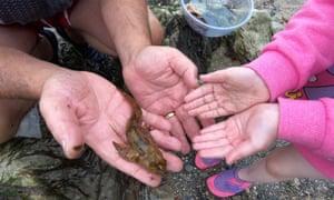 Encontrar en la playa: explore las piscinas de rocas del oeste de Gales