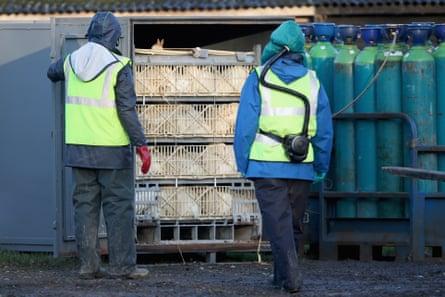 Una matanza en una granja de patos de Yorkshire en 2014