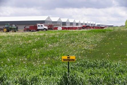 Granja de Iowa afectada por epidemia