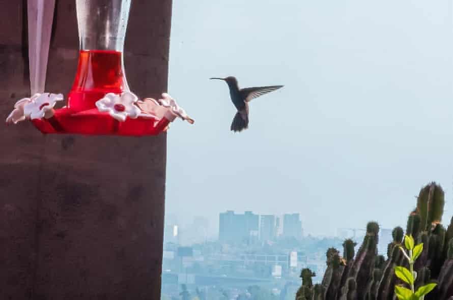 Un colibrí se cierne cerca de un comedero.