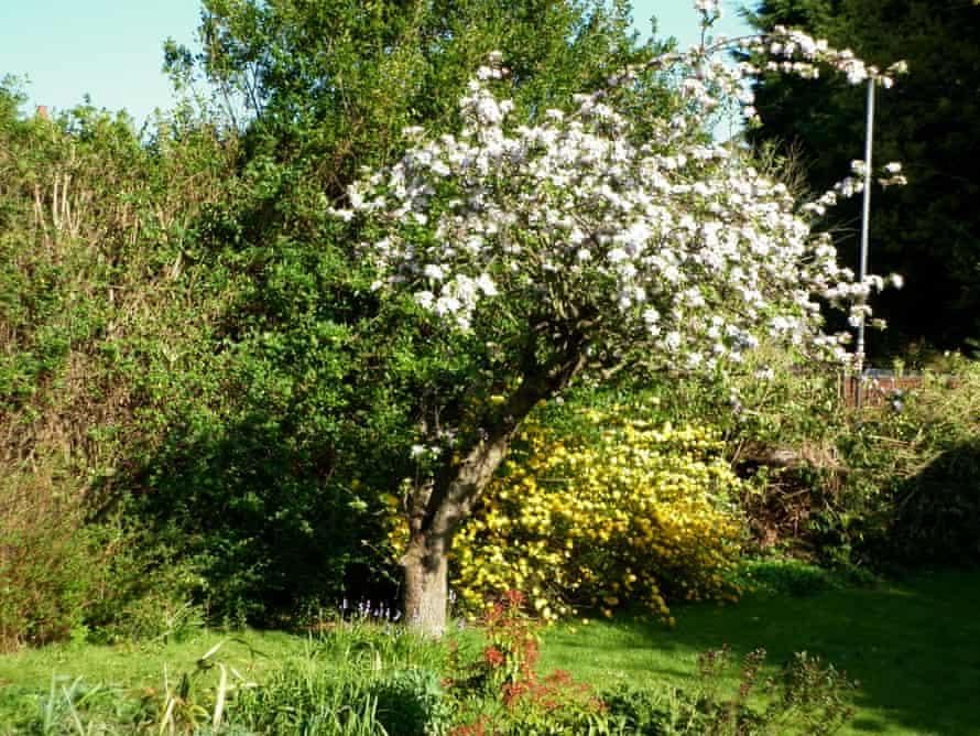 El jardín de Jonathan Best en Eltham.