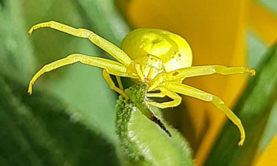 Una araña toma el sol en el jardín de St Albans.