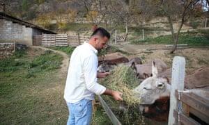Elton Kikia alimenta a los burros en un patio de la granja lechera de su familia en la aldea de Paper, Albania