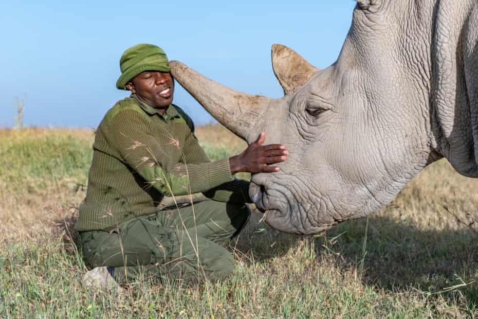 """""""En 2012, no había esperanzas para el rinoceronte blanco del norte"""", me dice el Dr. Thomas Hildebrandt, un experto en cría de vida silvestre de Berlín. Pero, inspirado en una conferencia interdisciplinaria sobre la vida interestelar, Hildebrandt utilizó subvenciones para forjar un consorcio internacional dedicado a salvar la especie. """"Nos dimos cuenta de que aún no habíamos llegado al final. De repente apareció un nuevo horizonte."""