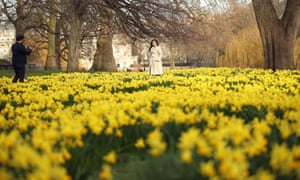 Narcisos en St James's Park, Londres