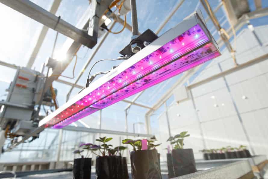 La radiación ultravioleta desencadena mecanismos biológicos que pueden aumentar el crecimiento, el vigor y el rendimiento de las plantas.