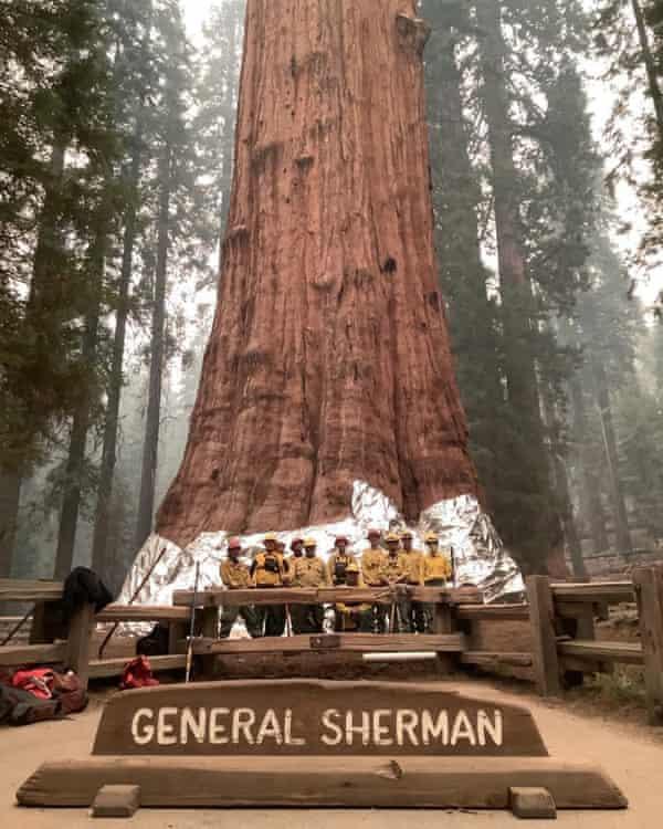 Los bomberos posan junto al árbol General Sherman después de envolverlo en una manta ignífuga el 17 de septiembre.